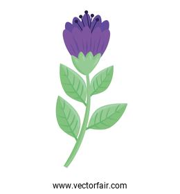 beauty purple color flower and leafs spring season icon