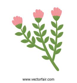 cute roses pink flowers and leafs spring nature icon
