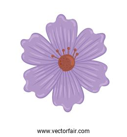 cute purple flower spring nature icon
