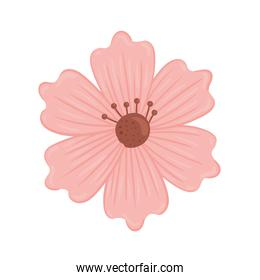 cute pink flower spring nature icon
