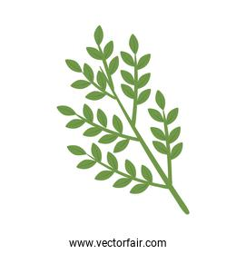 branches and leafs plant nature icon