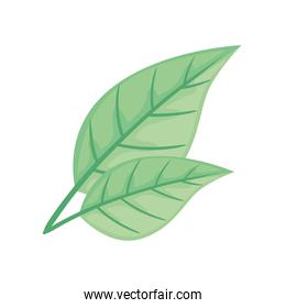leafs plant ecology nature icon