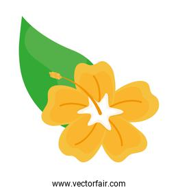 beautiful yellow orchid flower icon
