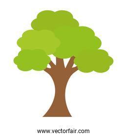 tree plant nature isolated icon