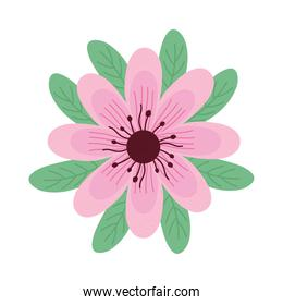 cute pink flower and leafs spring icon