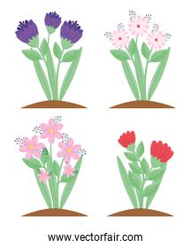 bundle of four flowers and leafs spring season plants