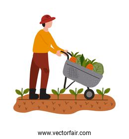 farmer worker with whelbarrow and vegetables