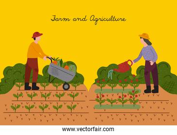 farmers couple working in the cultive scene