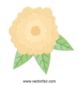 cute cream clor petals flower and leafs spring icon
