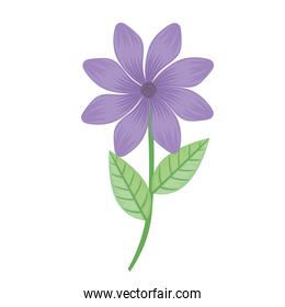 purple petals flower and leafs spring icon