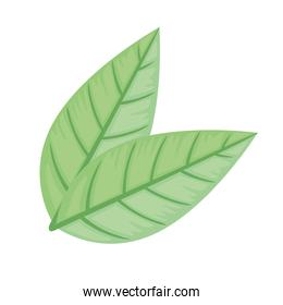 green leafs ecology nature icons