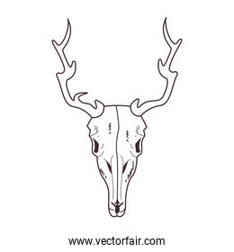 skull head of wild reindeer icon