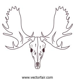 skull head of wild moose icon