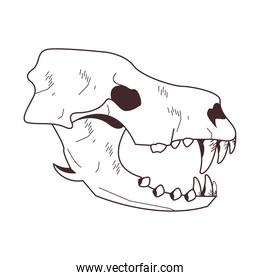 skull head of wild lion icon