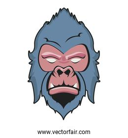 wild gorilla animal head blue and pink colors