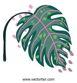 tropical exotic leaf monstera abstract style