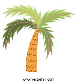 tropical palm tree nature exotic cartoon isolated