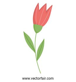 red flower nature decoration isolated style