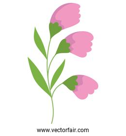bouquet flowers leaf decoration isolated style