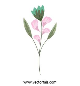 flower petals and leaves decoration white background