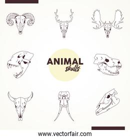 bundle of eight skulls animals heads icons