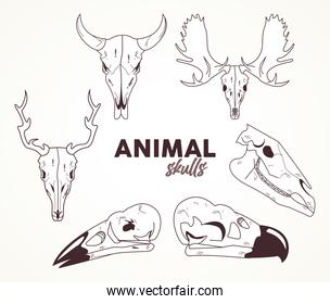 bundle of six skulls animals heads icons