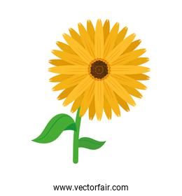 beautiful yellow flower icon, colorful design