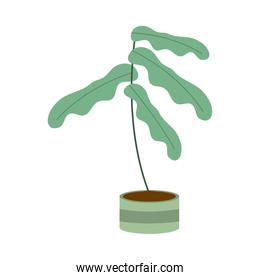 gardening plant in pot nature icon on white background