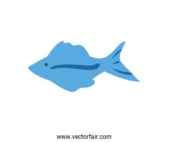 Blue fish animal with line vector design