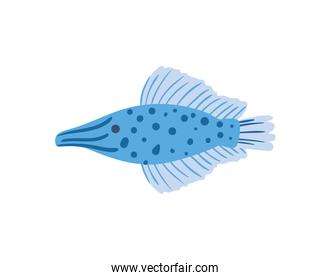 Pointed fish animal isolated vector design