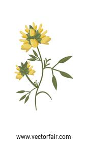 yellow flower with leaves isolated vector design