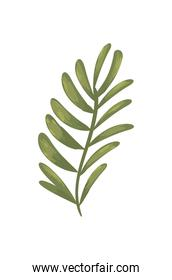 green leaves isolated vector design