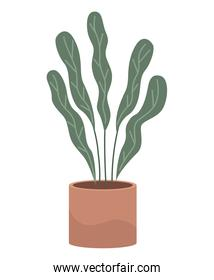 house plant in ceramic pot nature isolated icon
