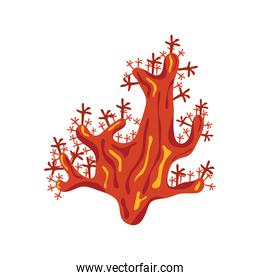 orange coral sea life nature icon