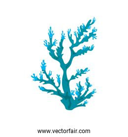 blue coral sea life nature icon