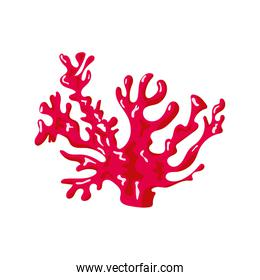 red coral sea life nature icon