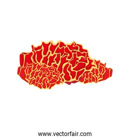 orange brain coral sea life nature icon