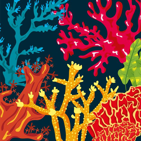 colorful corals sea life nature pattern