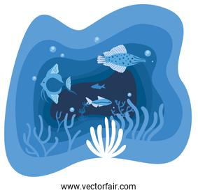 Fishes animals and corals vector design