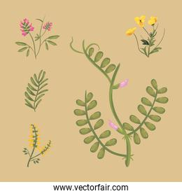 flowers with leaves icon group vector design