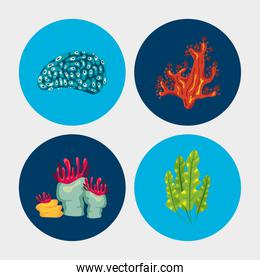 bundle of four coral sea life nature icons