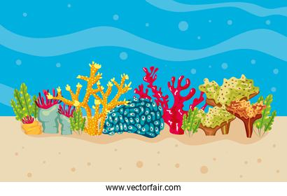 corals and algaes in sea water nature scene