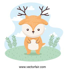 cute  lovely ,  reindeer in the camp