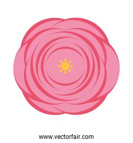 beautiful pink flower icon, colorful design
