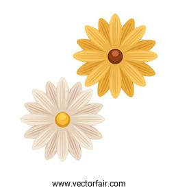 yellow and white flowers garden isolated icon