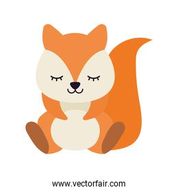 cute squirrel on a white background
