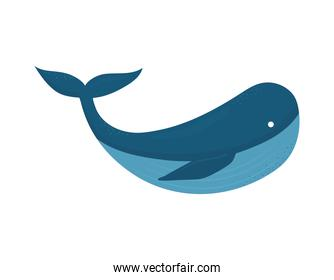 whale on a white background