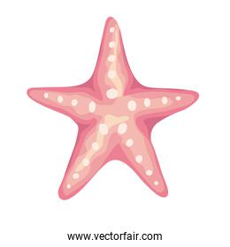 starfish sea shell color pink isolated icon