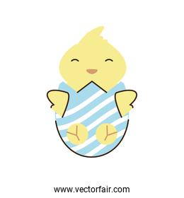 happy easter cute chicken in cracked egg cartoon isolated style