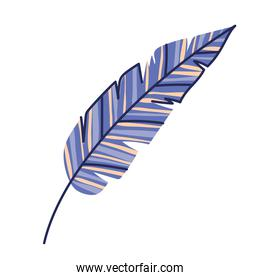 purple feather on a white background